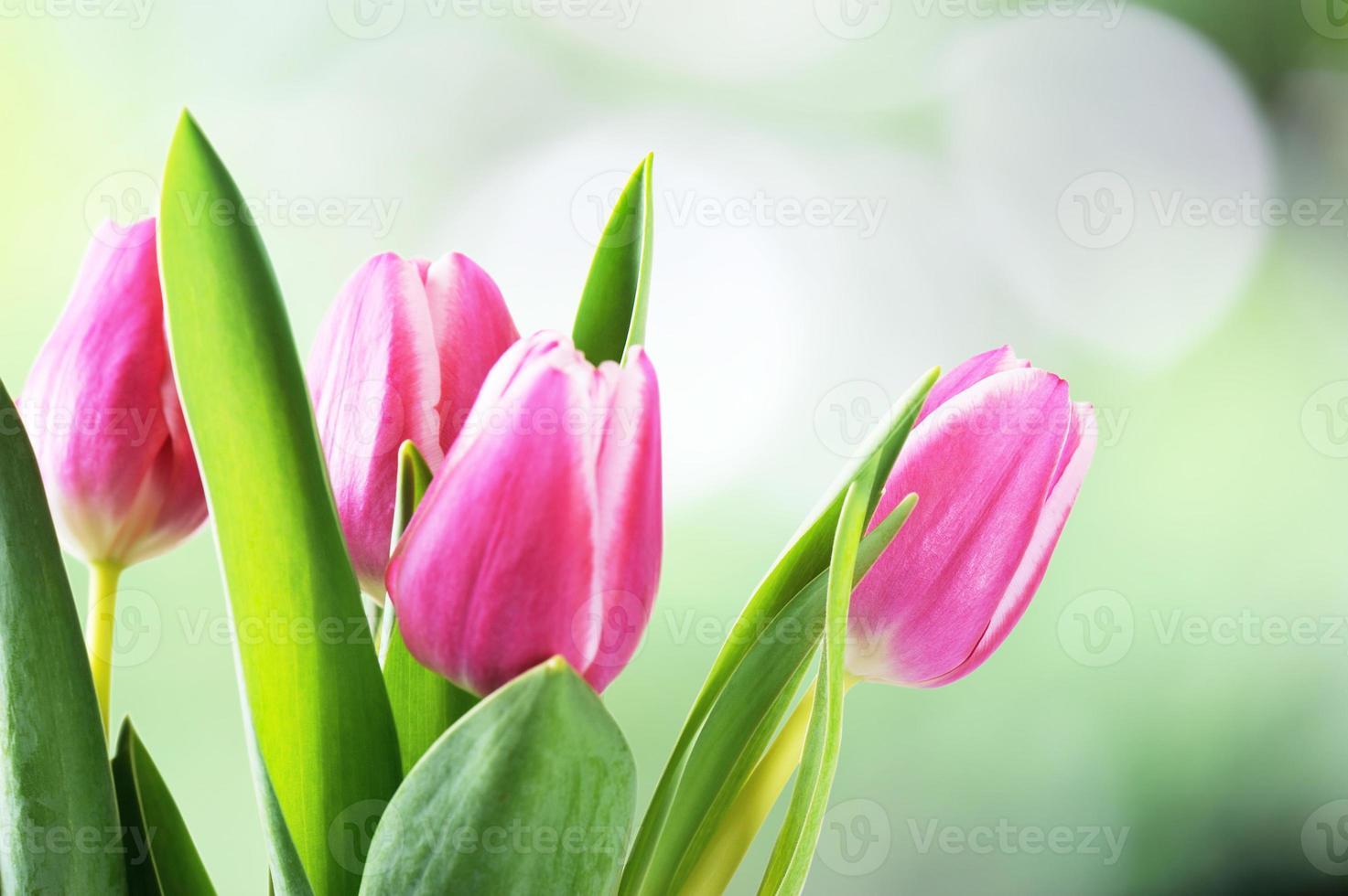 mazzo di fiori di tulipano foto