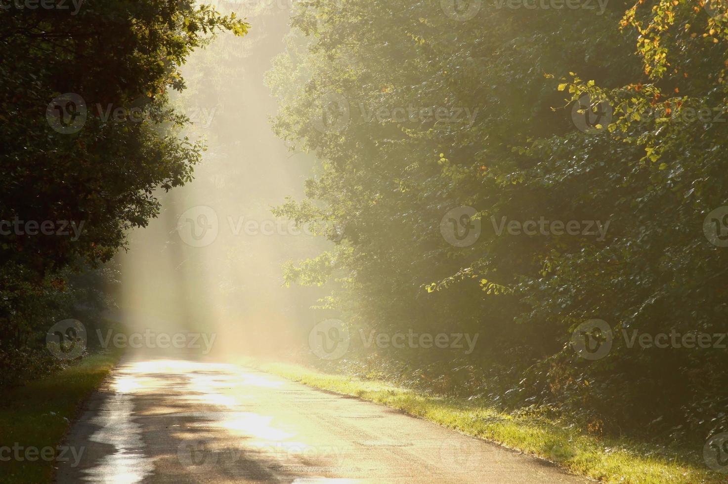 strada di campagna nebbiosa all'alba foto