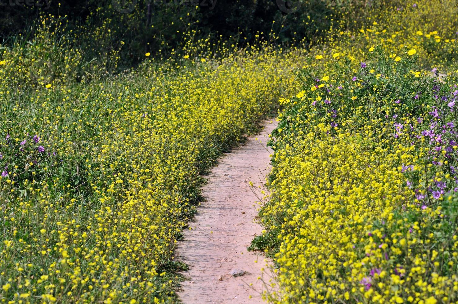 percorso dei fiori foto