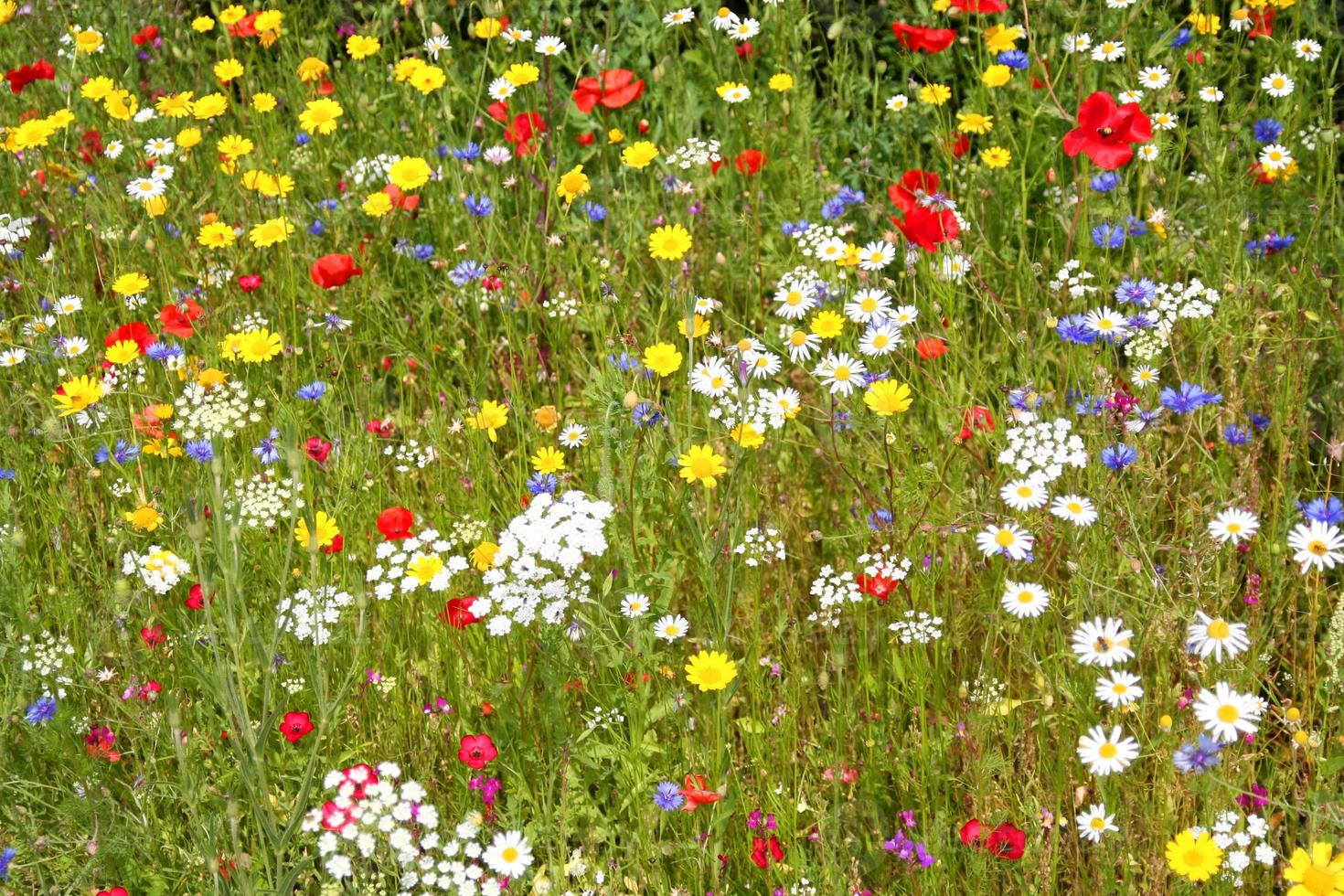 fiori selvatici. foto