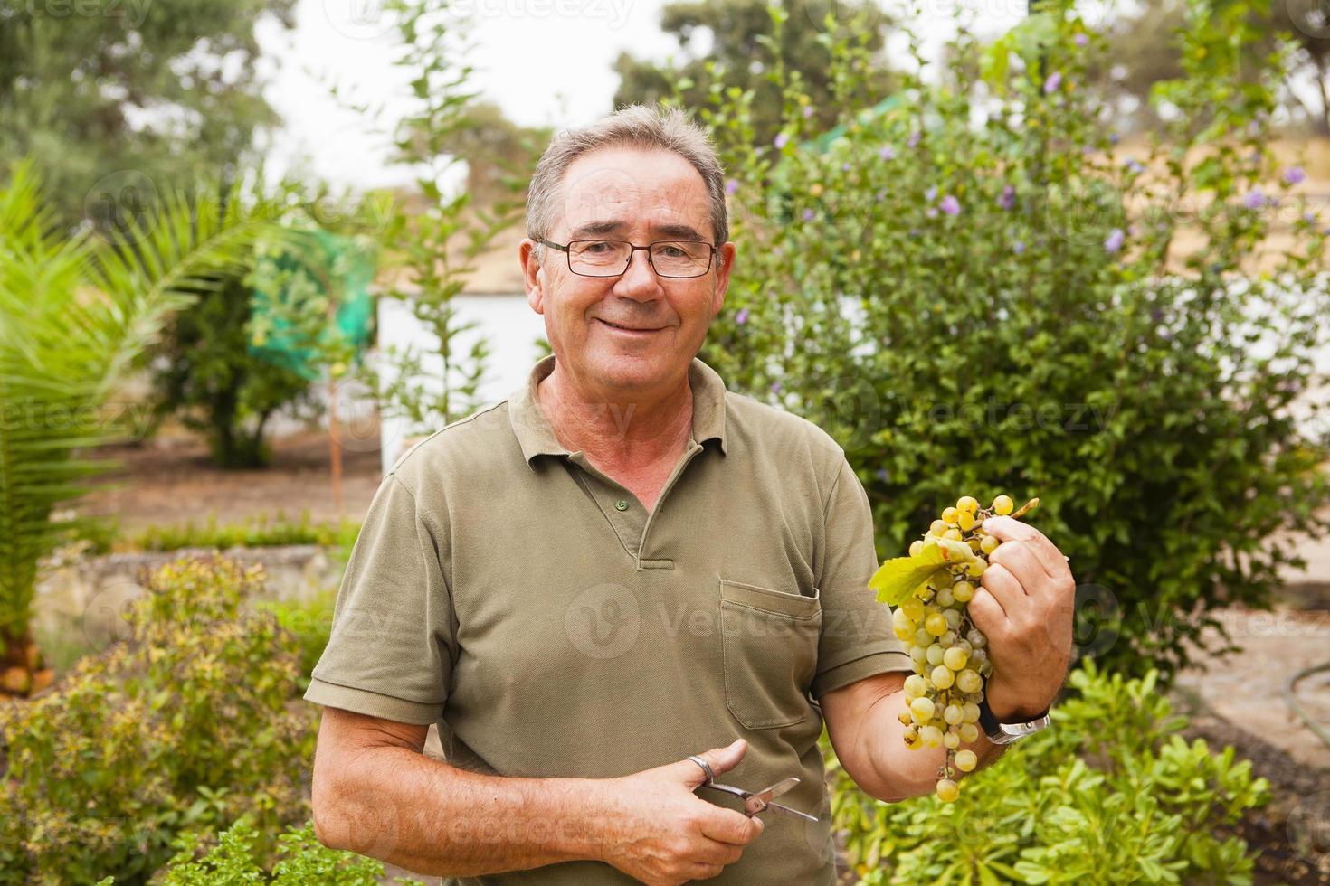 Ritratto di uomo anziano sorridente con un raccolto di uva. foto