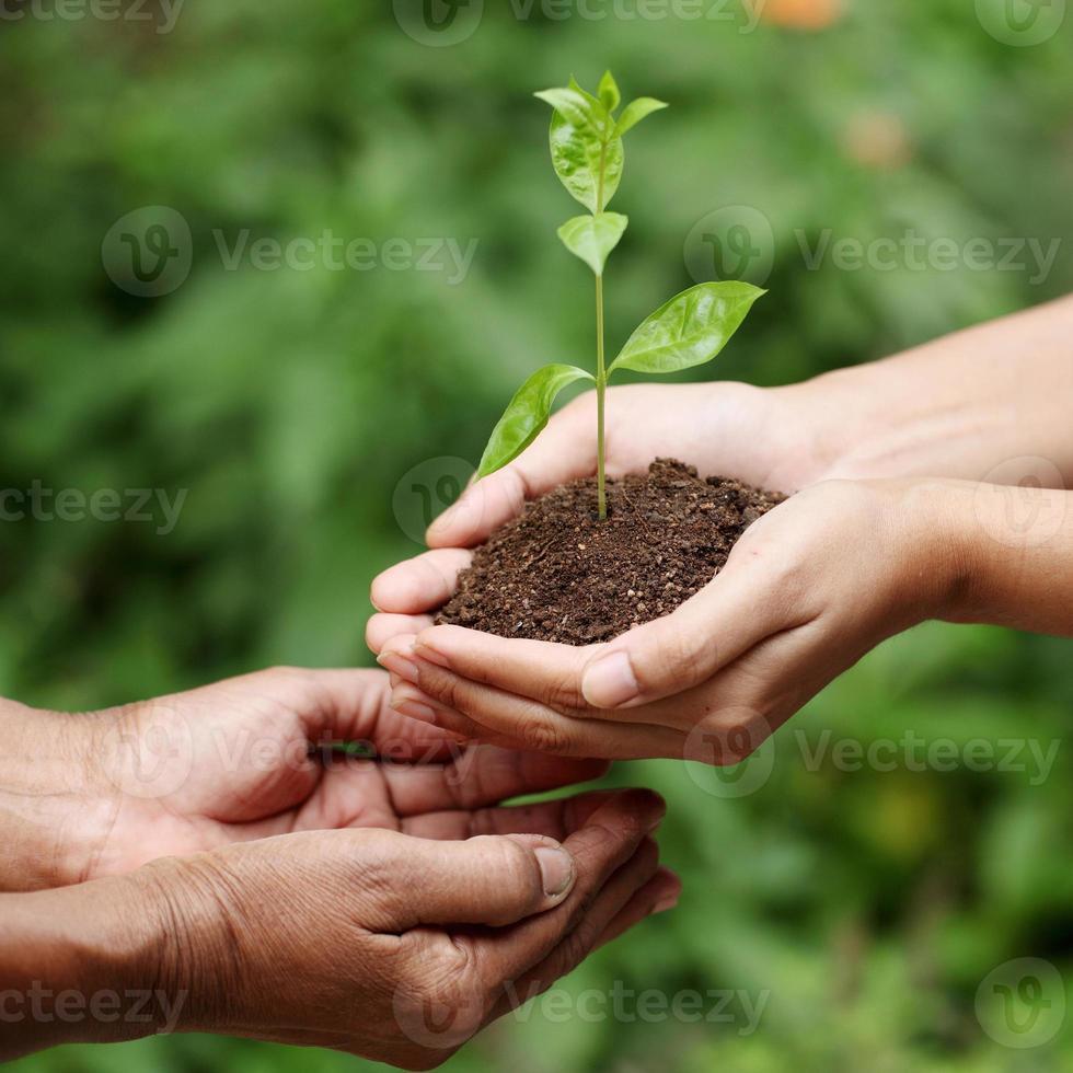 mani che tengono una pianta del bambino foto