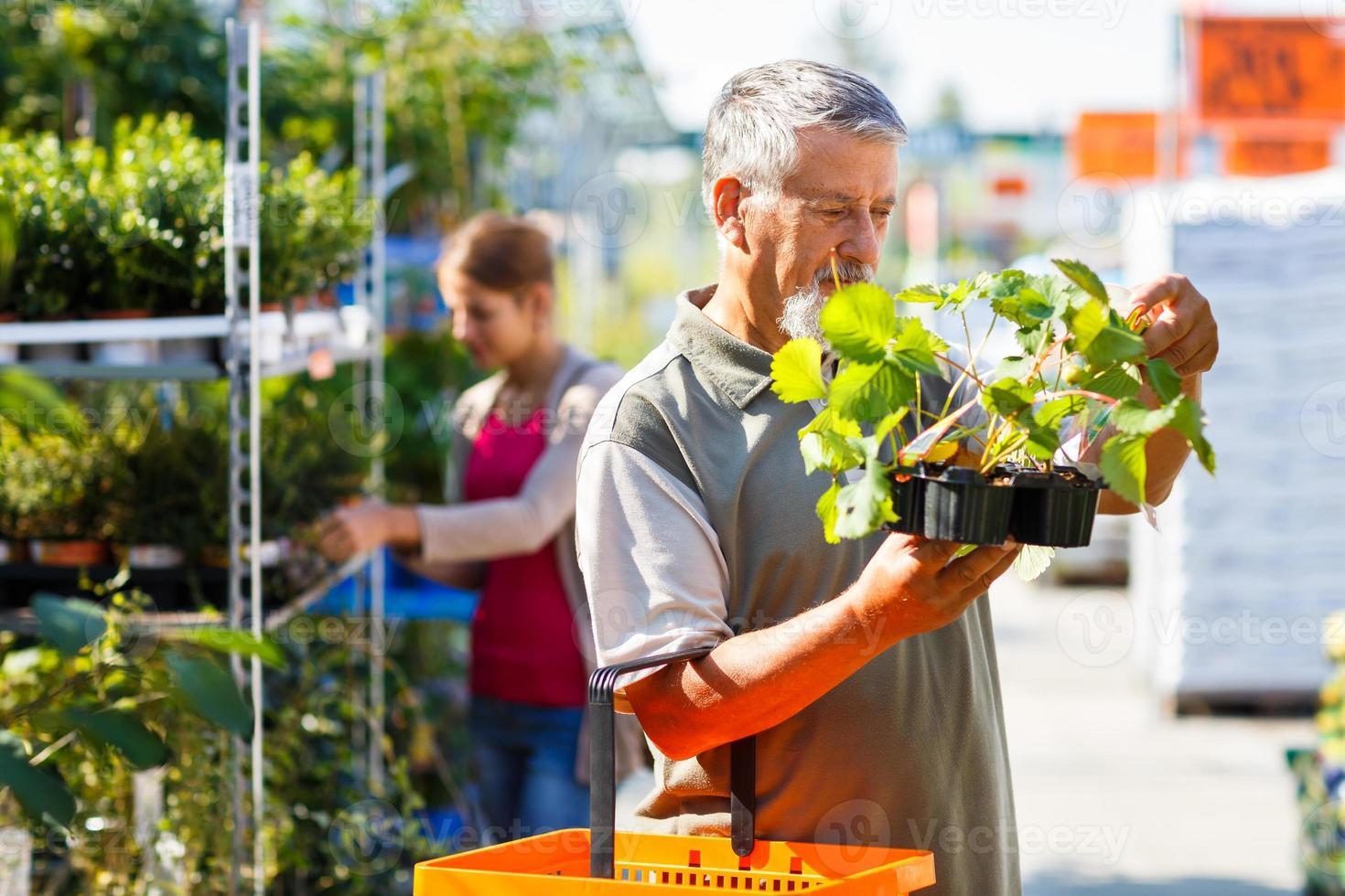 uomo senior che compra le piante di fragola in un centro di giardinaggio foto