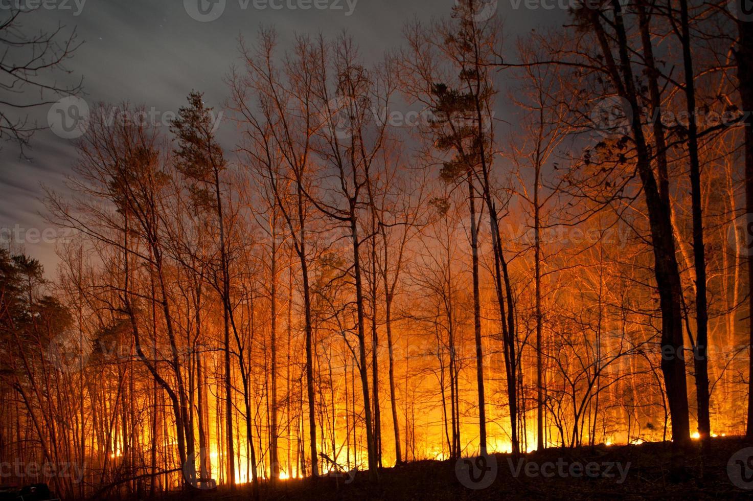 incendio boschivo che brucia di notte foto