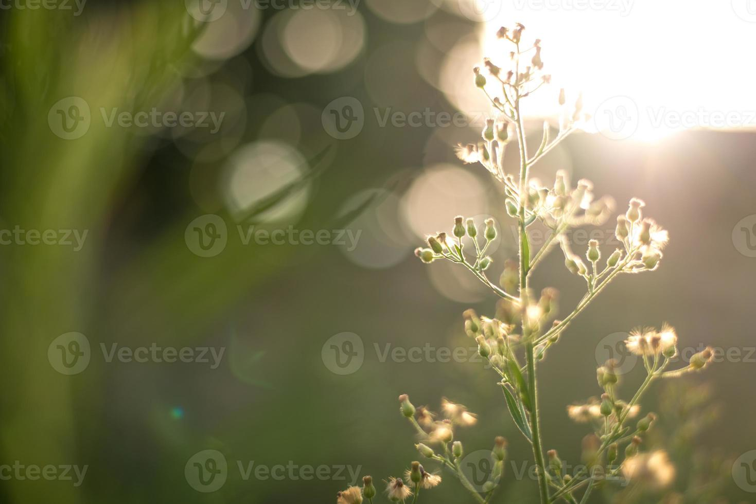 piccola pianta con bokeh backgroun foto