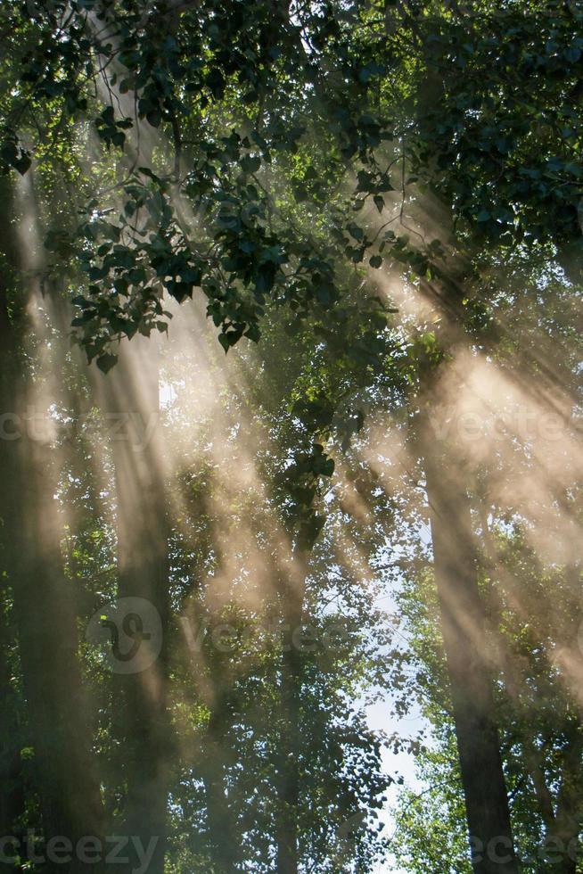 la luce attraverso la foresta foto