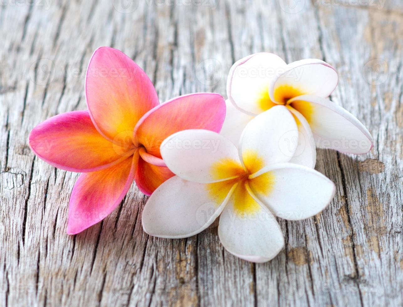 fiori di plumeria foto