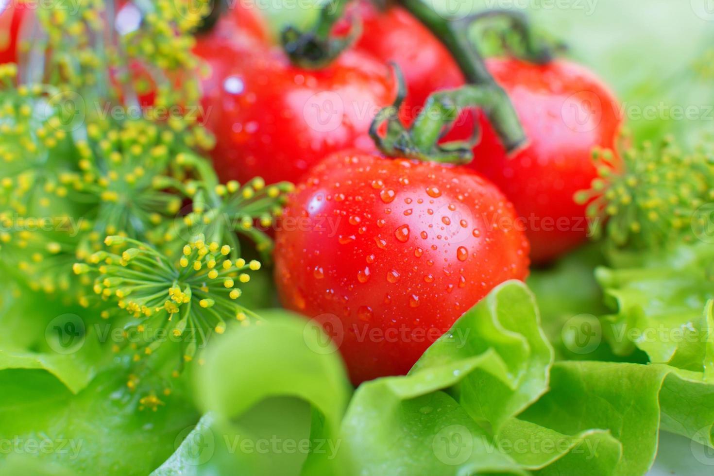 primo piano di pomodori freschi foto