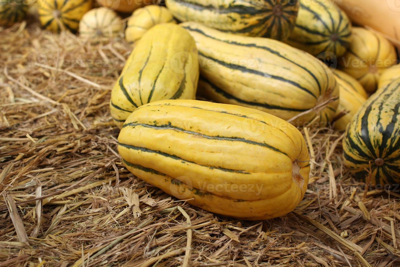 zucca butternut foto