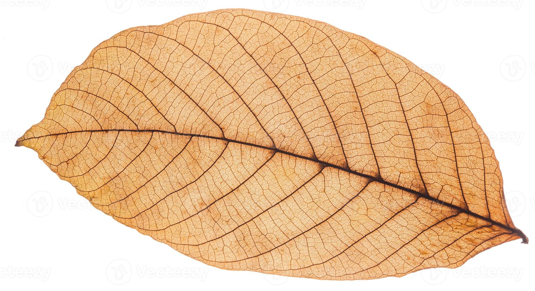 bellissimo leafe autunno colorato foto