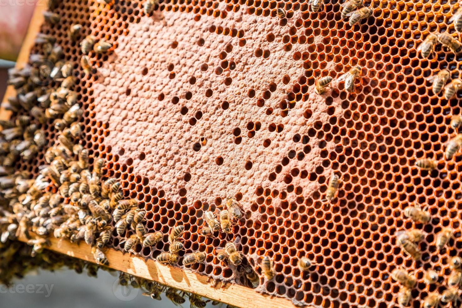 cornice con miele e api foto