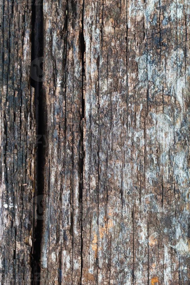 decadimento del legno foto