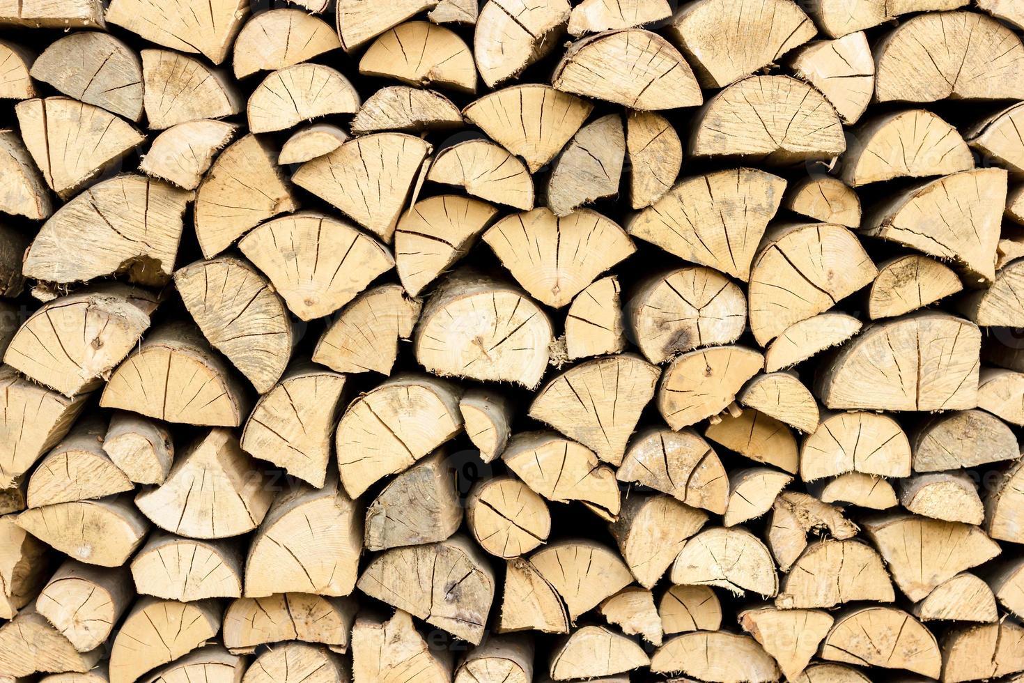 tronchi d'albero nella sezione foto