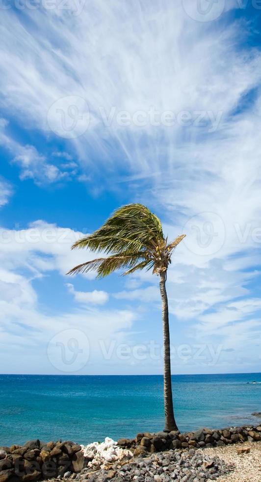 whoosh - palma soffiata dal vento foto