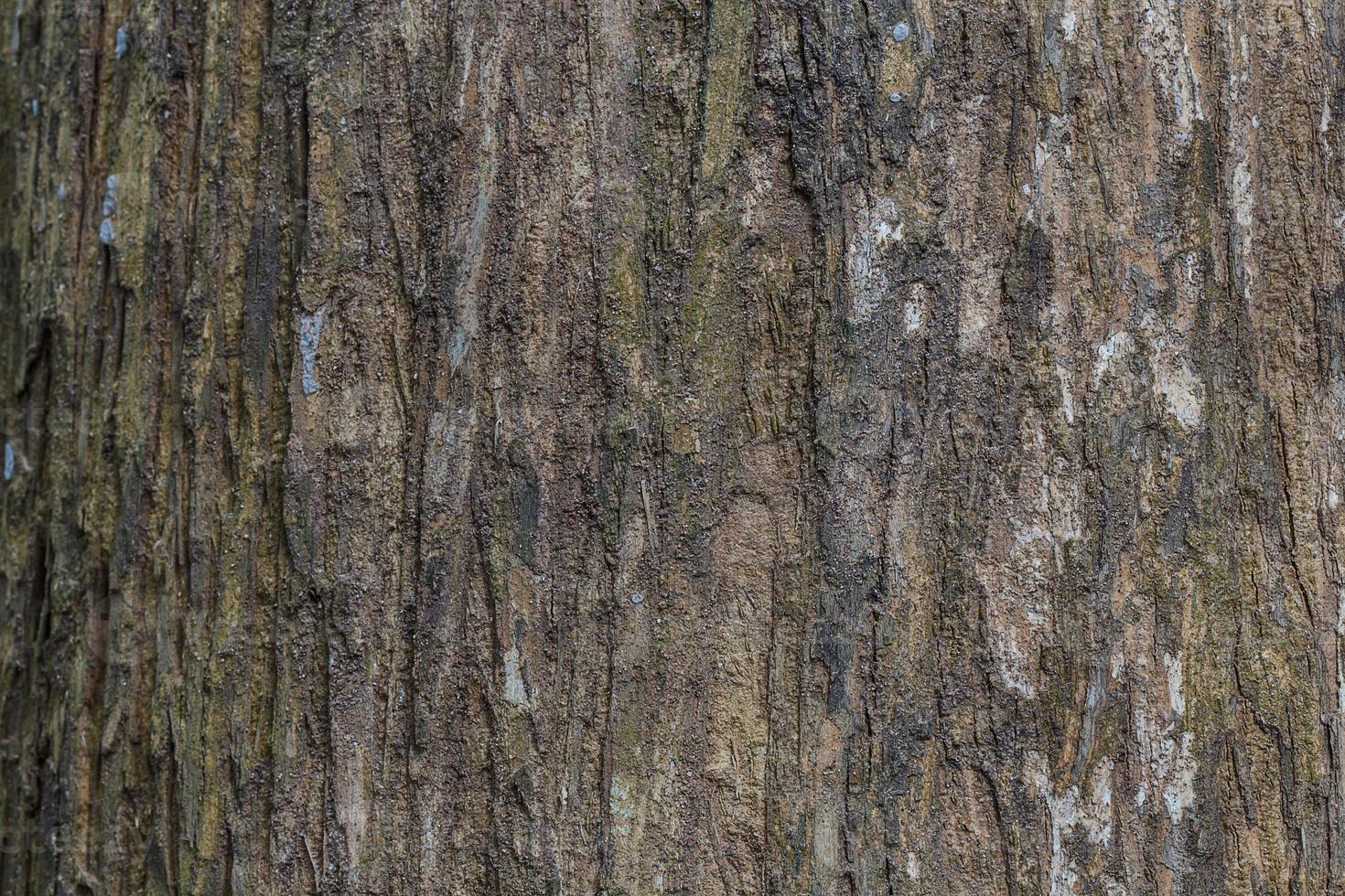 struttura della corteccia di albero struttura di legno / fondo di struttura di legno foto