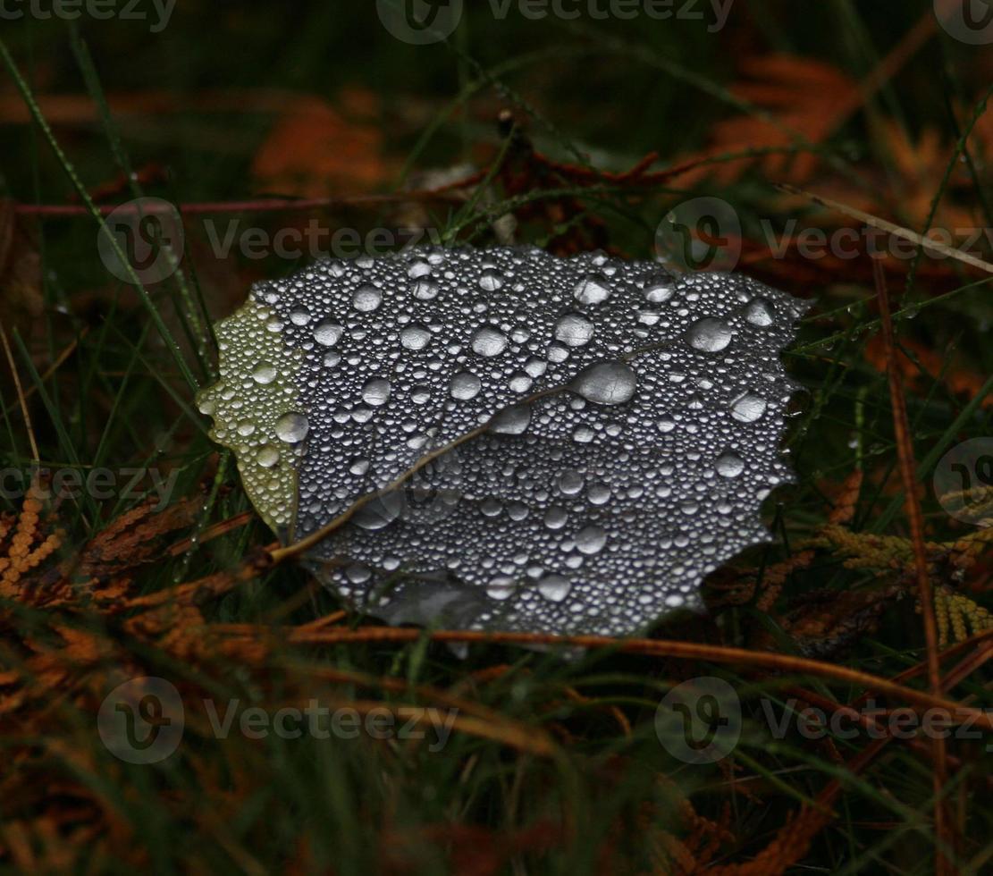 foglia dopo la pioggia foto