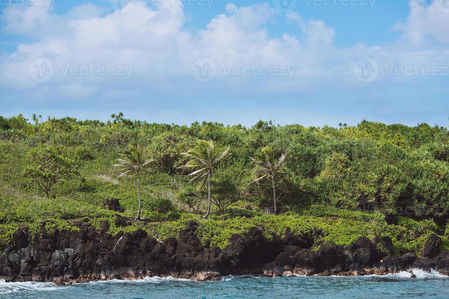 palme sulla costa - wai'anapanapa state park, maui, hawaii foto
