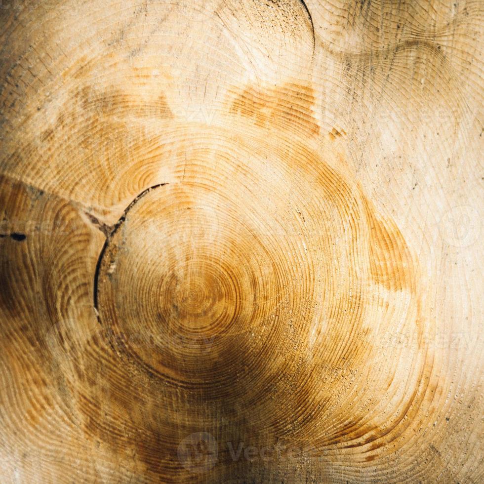 anelli di crescita degli alberi mostrati in legno abbattuto foto