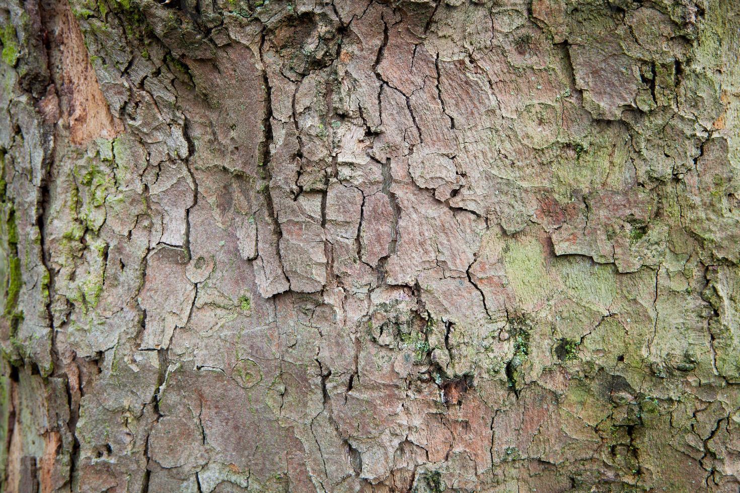 asse di legno astratto sfondo albero di legno foto