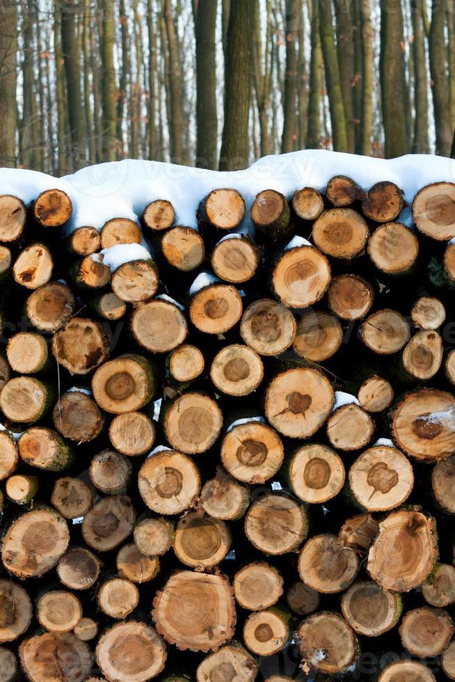mucchio di legno foto