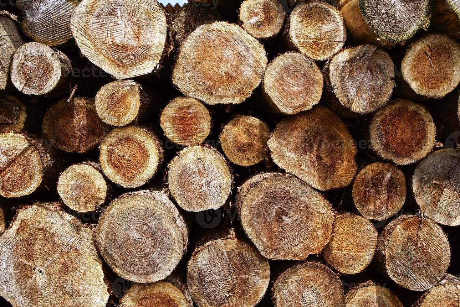 anello di albero di legno abbattente foto