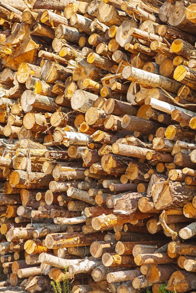 mucchio di tronchi d'albero foto