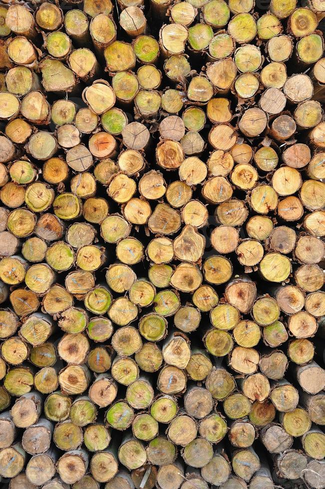 sezione del legname circolare foto