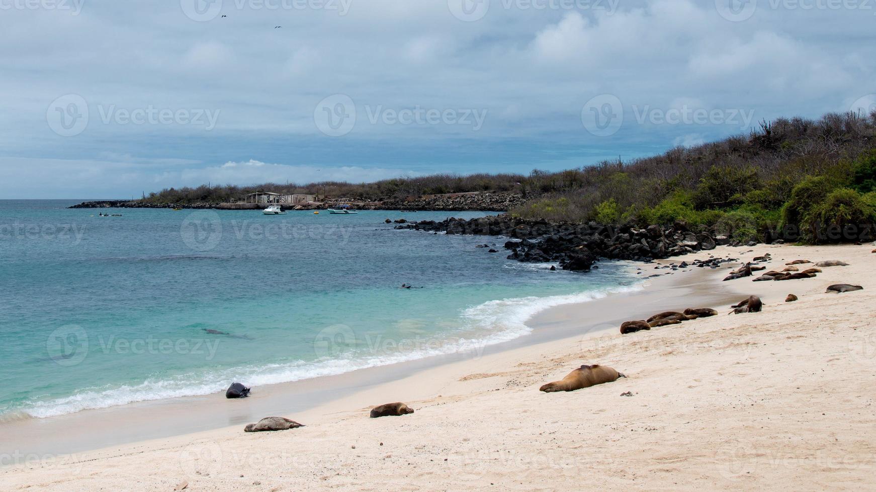 san cristobal - galapagos foto