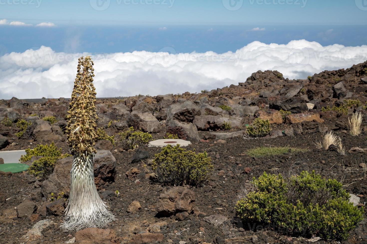 stati uniti d'america - hawaii - maui, parco nazionale di haleakala foto