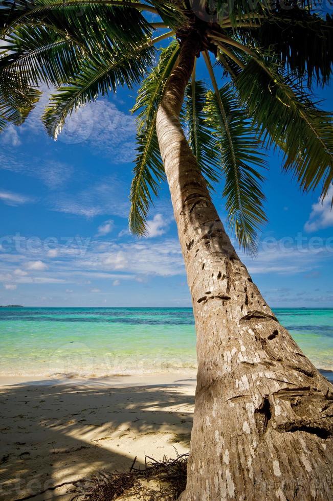 palma sulla spiaggia di sabbia 05 foto