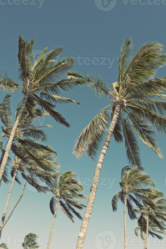 hawaii maui palme da spiaggia foto
