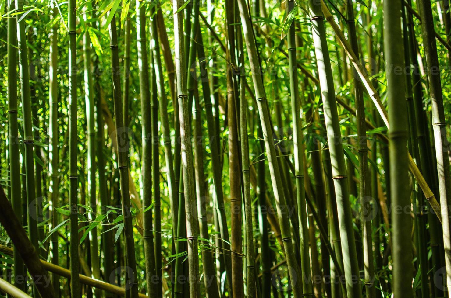 primo piano di bambù foto