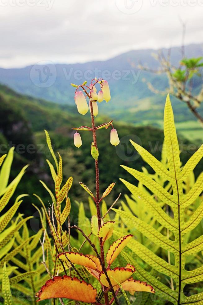 fiore hawaiano in montagna foto