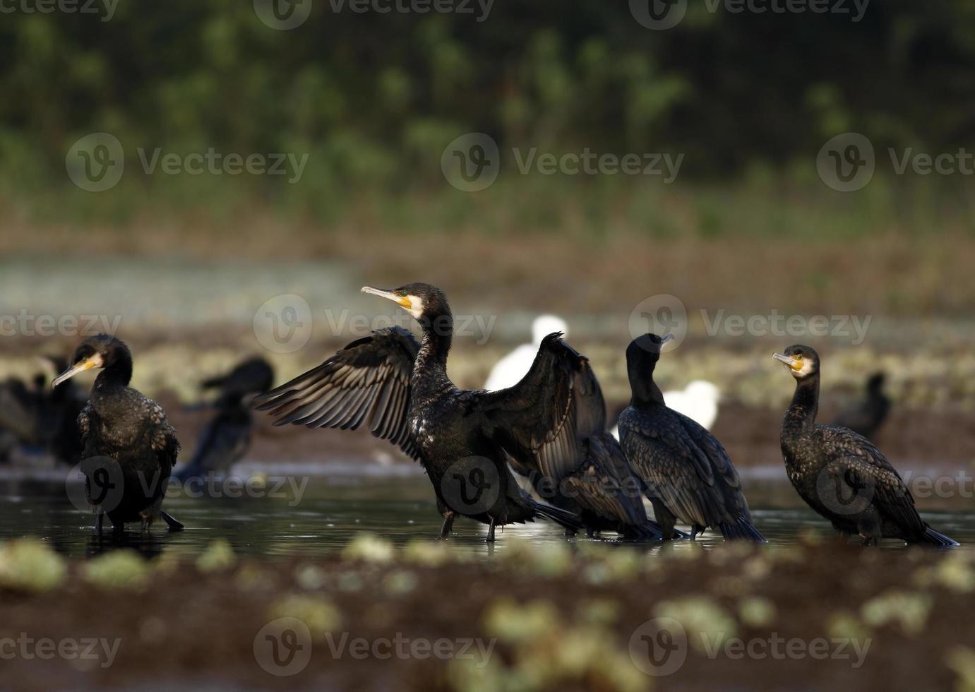 grande famiglia di carmorant foto