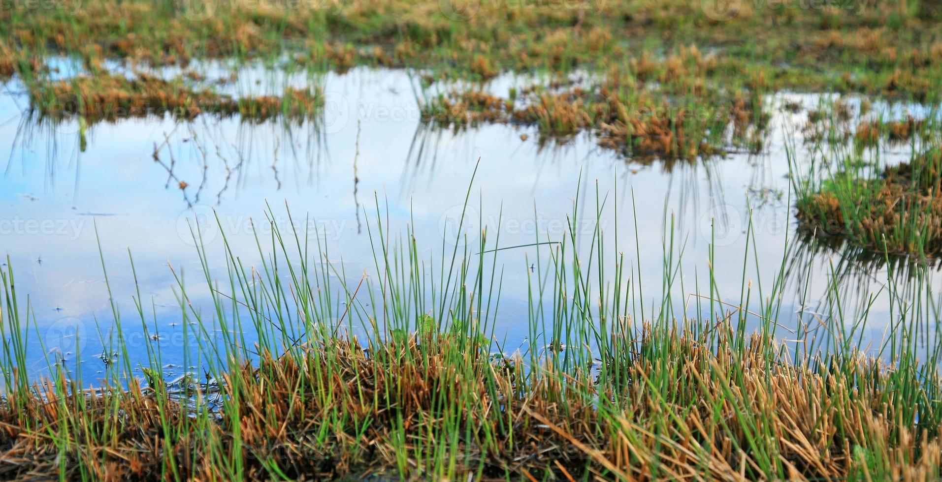 terre bagnate foto
