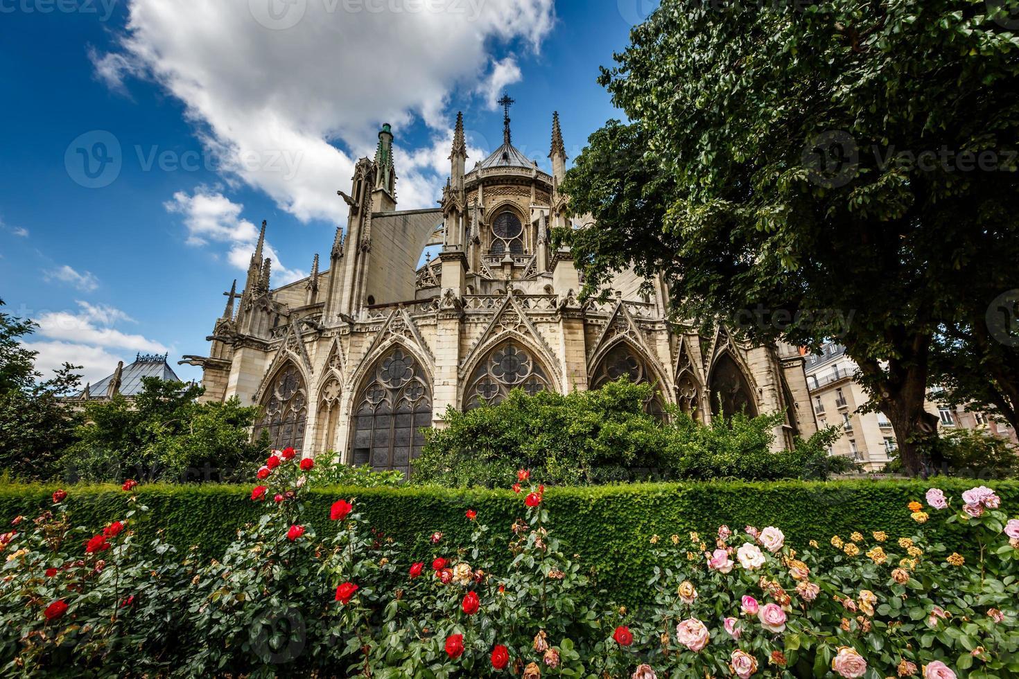 cattedrale di Notre Dame de Paris con rose rosse e bianche foto