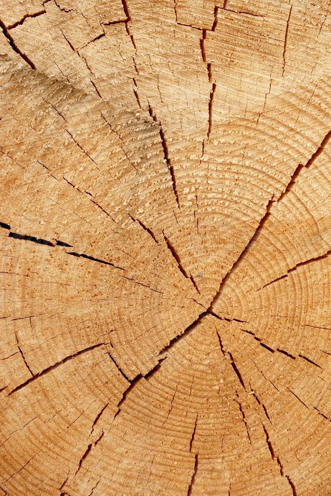sezione trasversale di vecchio albero foto