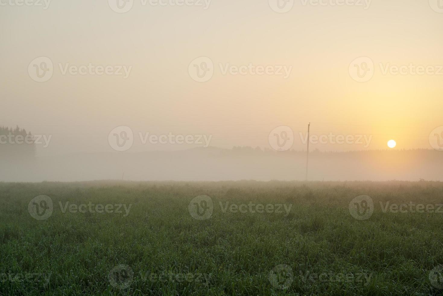 mattina nebbiosa foto