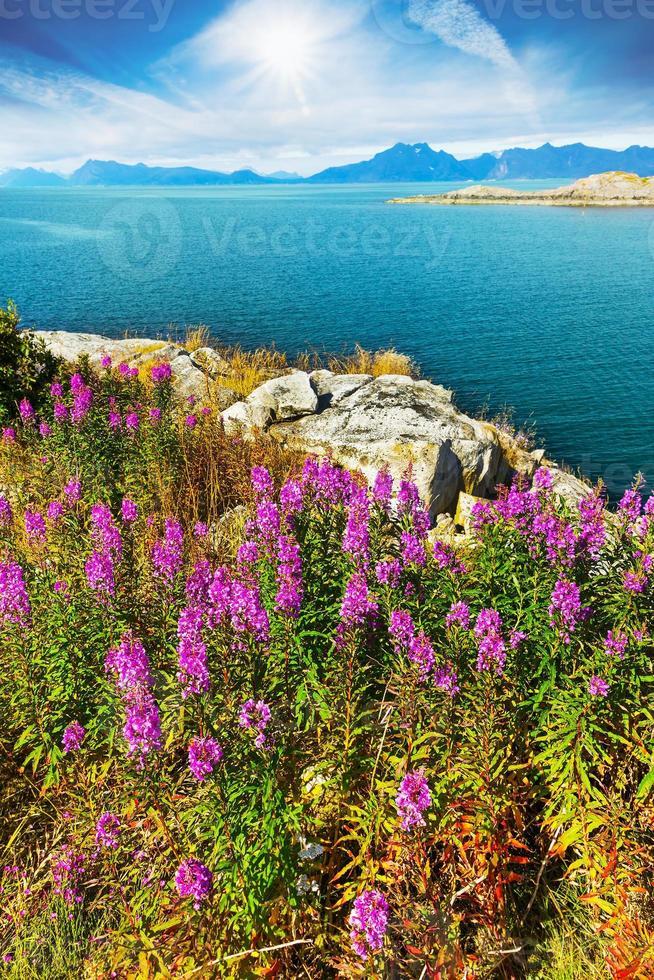 baia dell'oceano vicino a hennigsvaer sulle isole lofoten in Norvegia foto