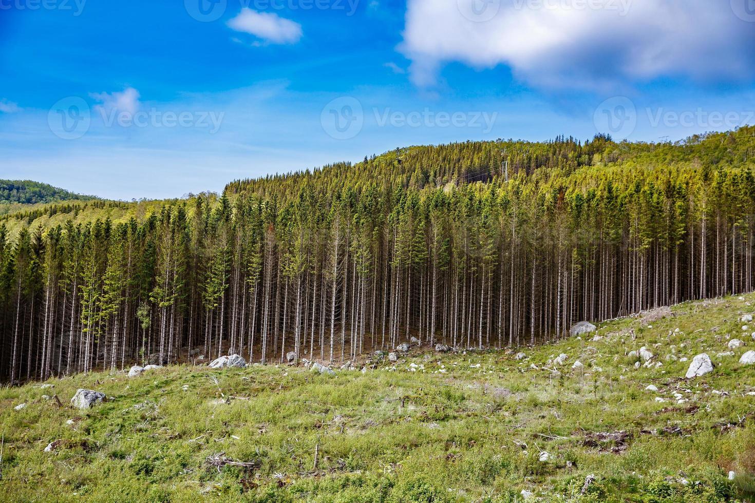 deforestazione in Norvegia foto