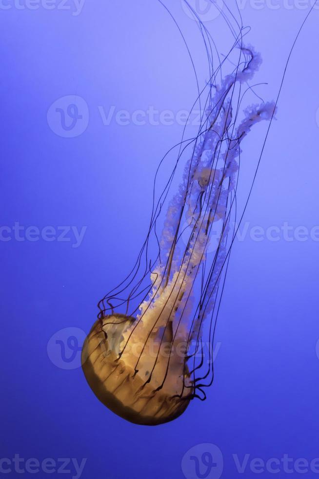 ritratto di meduse foto