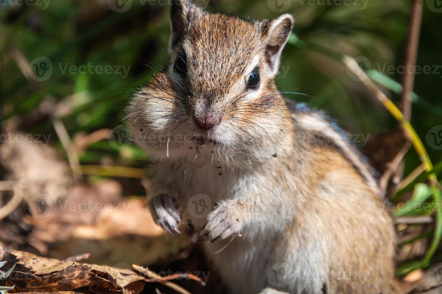 ritratto di scoiattolo bello foto