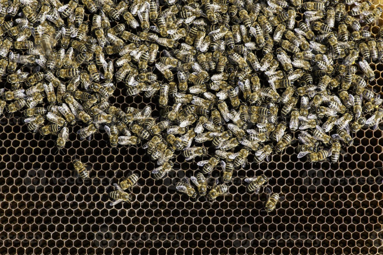 vicino a nido d'ape foto