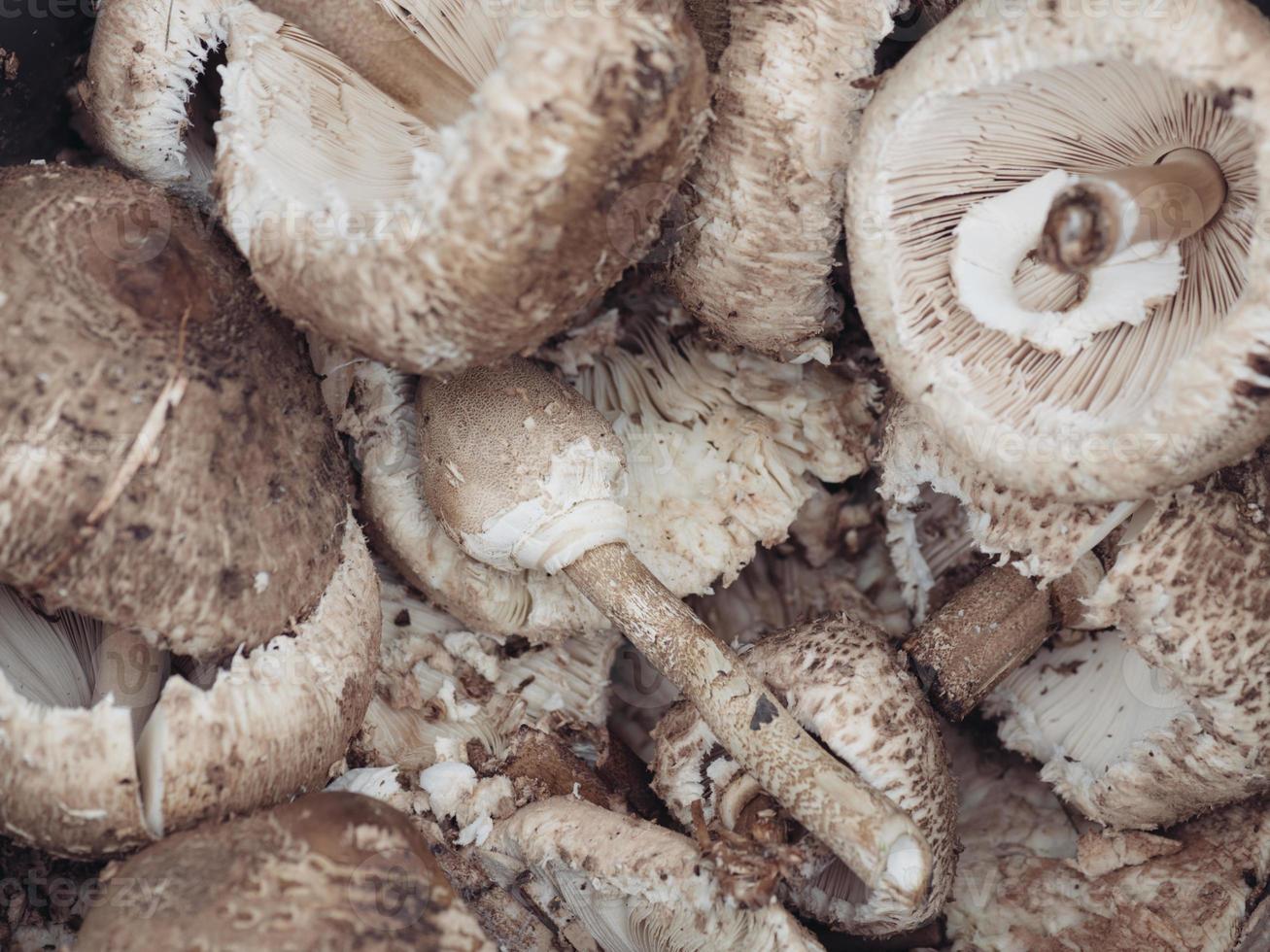 funghi ... primo piano foto