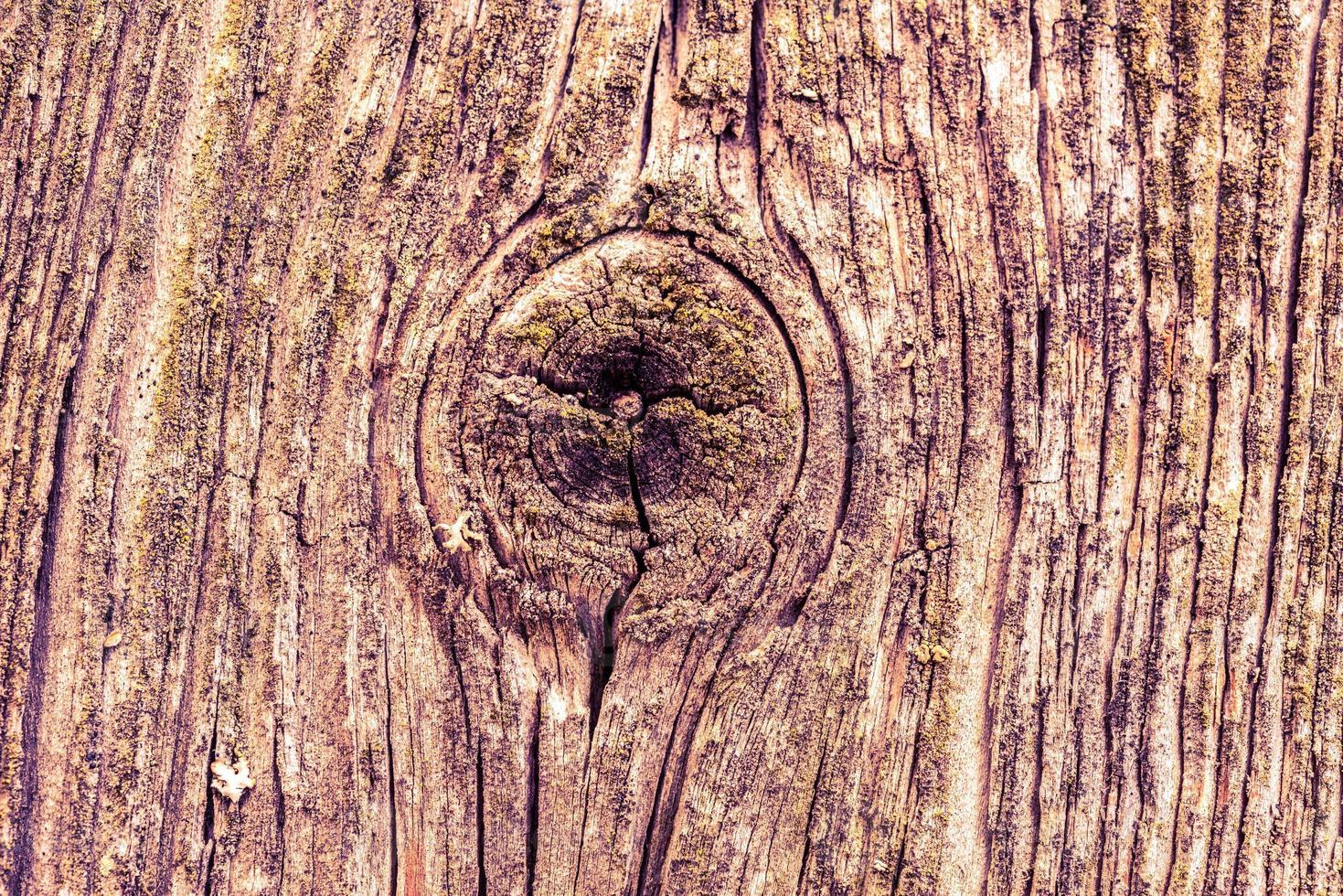 vecchio legno incrinato foto