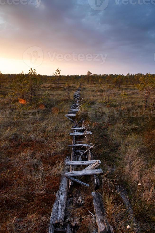 vecchio sentiero nella palude foto
