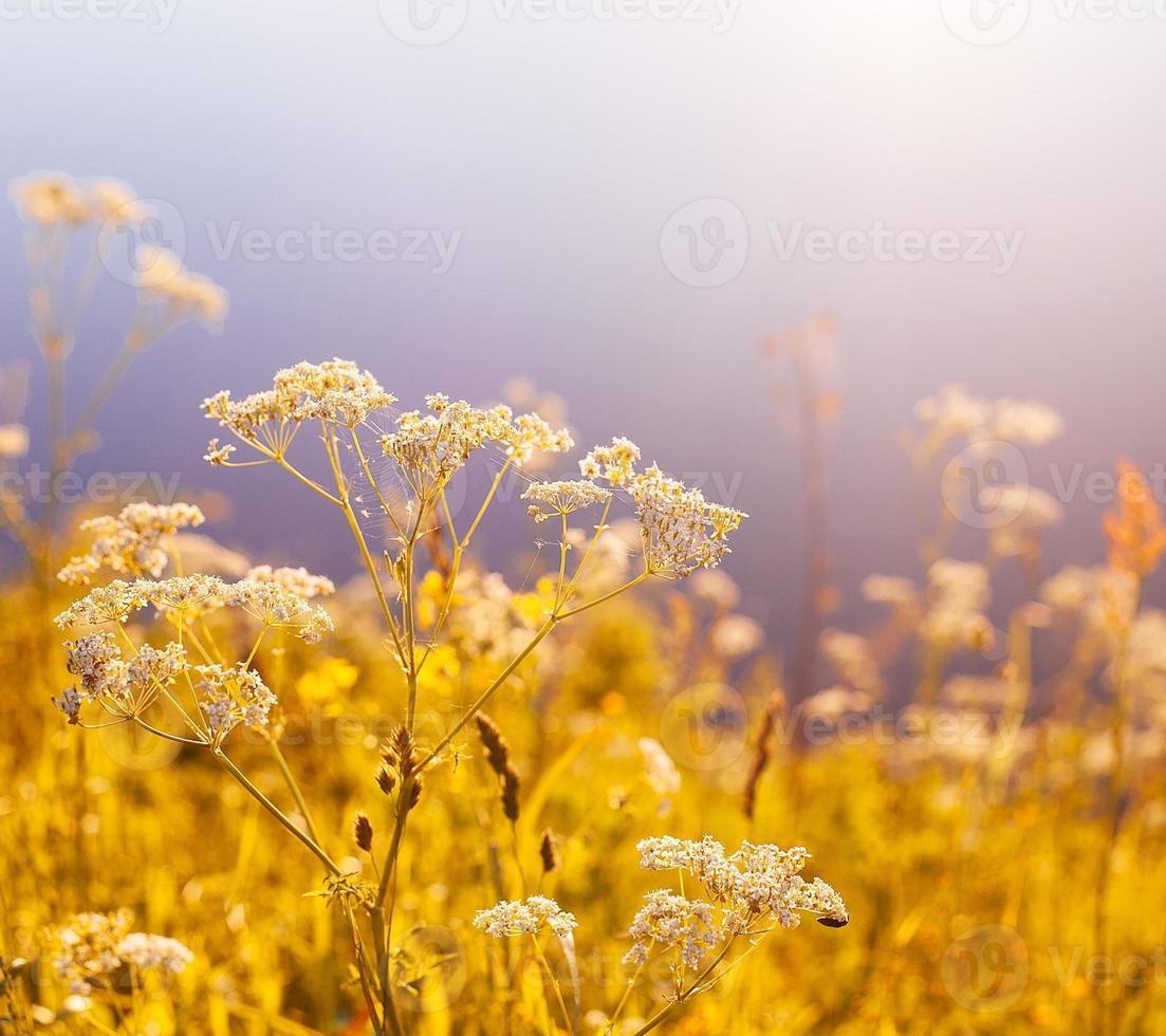 Flou vintage retrò con erba e fiori foto