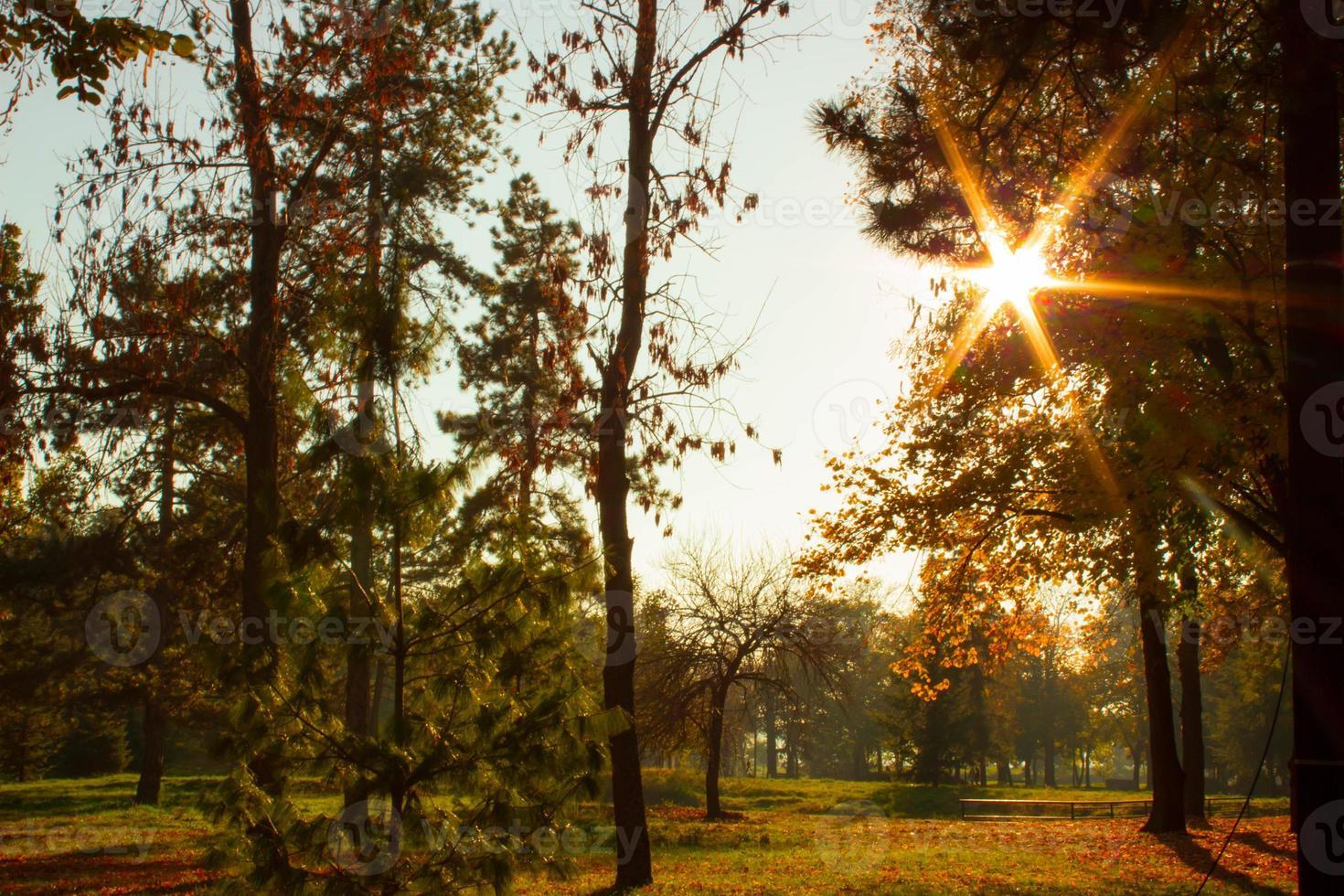 sunflare dietro la cima degli alberi nel parco foto