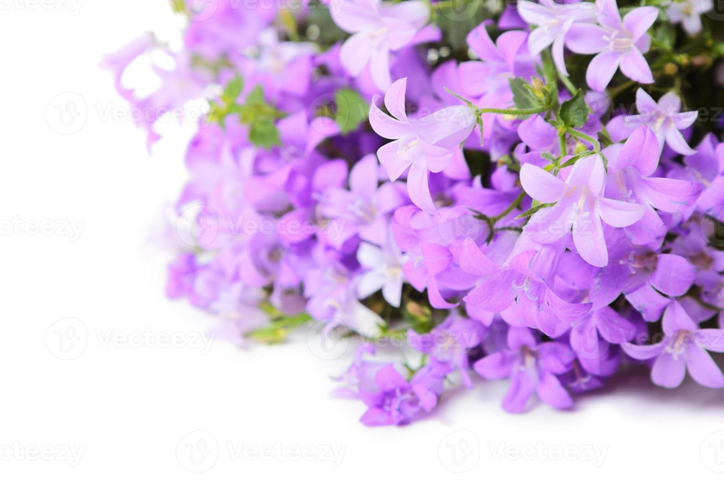 fiori a campana foto