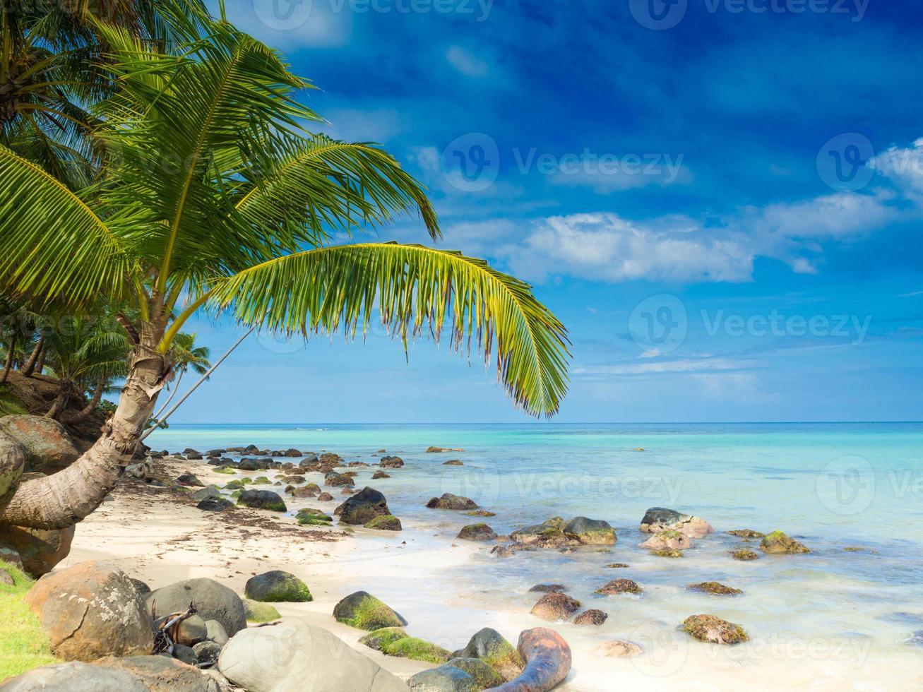spiaggia tropicale foto